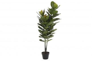 PLANTA PVC 56X126 RUBBER PLANT